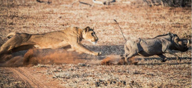 Ashnil Low Season Safari Resident Offers