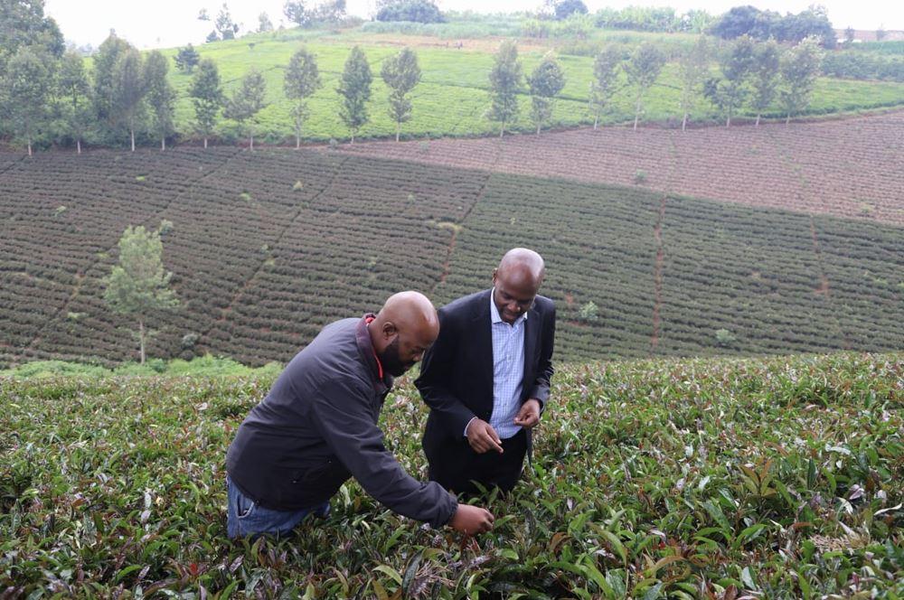 Kenya Farm Tours To Propel Tourism