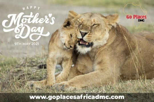 Mothers Day Kenya Travel Offers