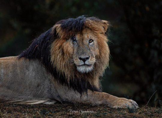 Tourism News Kenya - RIP King Scarface