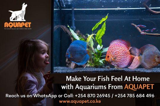 Aquariums From Aquapet