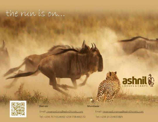 Ashnil Mara Camp Wildebeest Migration