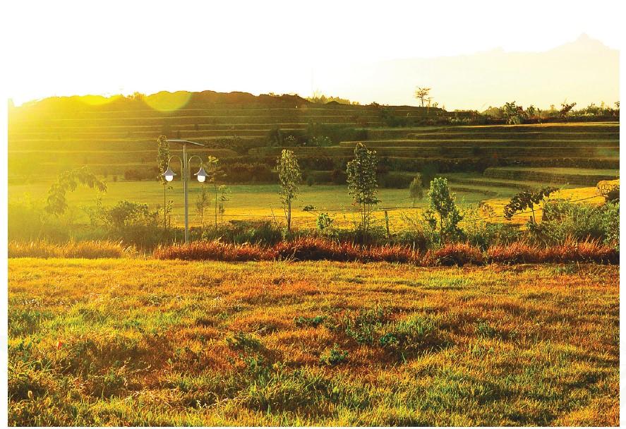 Swara Field