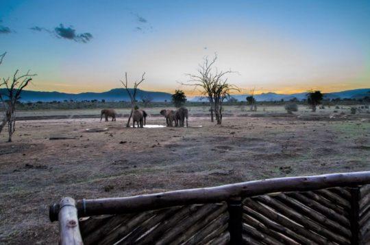 Amazing October Safari Offer With Sentrim Hotels & Lodges